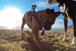 GoPro Fetch is a Camera Mount for Dogs That Captures a Dog's Eye View