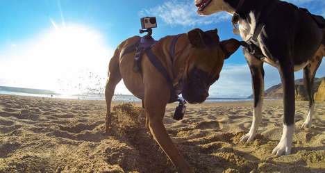 Canine Camera Mounts - GoPro Fetch is a Camera Mount for Dogs That Captures a Dog's Eye View