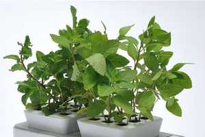This Versatile Planter is Combined With a Hydroponics System