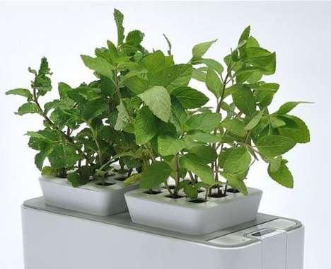 Self-Watering Indoor Gardens