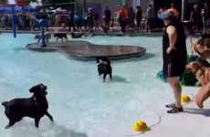 Pooch Pool Parties - This Idaho City Threw a Pool Party for Dogs to Raise Money for Its Dog Park