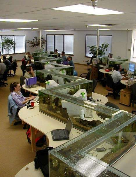 Aquarium Desk Dividers - Freshwater Software Separated Its Cold Callers in a Fishy Way