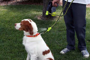Digitized Pet Protection