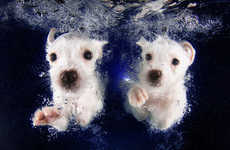 Swimming Dog Photography