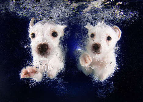 Swimming Dog Photography - Seth Casteel's Underwater Puppies Image Series is Adorably Candid