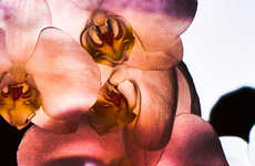Botanical Projection Photography - Rainer Torrado Captures Mui Mui in this Superimposed Photo Series