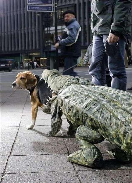 Doggie Dress-Up