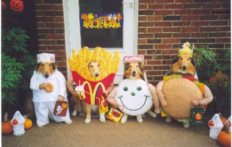 Doggie Dress-Up
