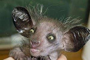 10 Ugly Animals