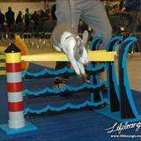 Jumping Jackrabbit Competitions
