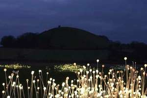 Field of Light Sculptures