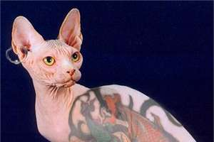 Owners Ink Up Cats and Dogs