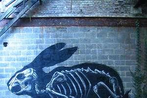 Anatomically Correct Graffiti
