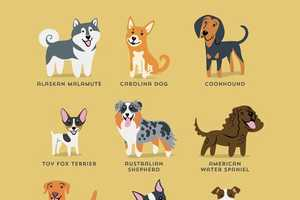 The Dogs of the World Infographic by Lili Chin Features Dog Diversity