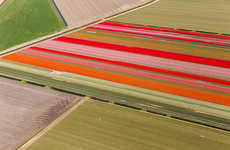 Aerial Tulip Captures - These Photos of Tulip Fields Are Spectacular