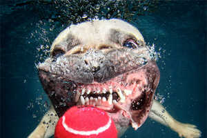 These Photographs by Seth Castee Feature Canines Underwater