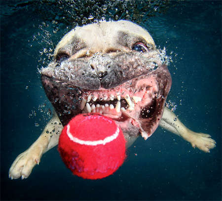Submerged Puppy Captures - These Photographs by Seth Castee Feature Canines Underwater