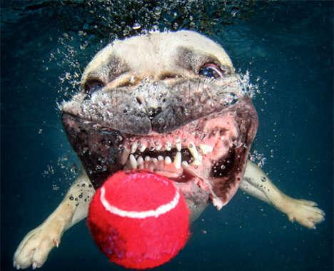 Submerged Puppy Captures