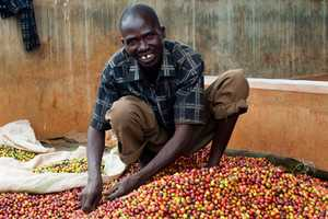 This Coffee Wastewater Project Addresses Harmful Environmental Impacts