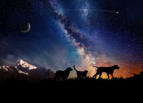 Astronautical Animal Afterlife Packages - This Pet Memorial Service Sends Your Dead Pets Into Space
