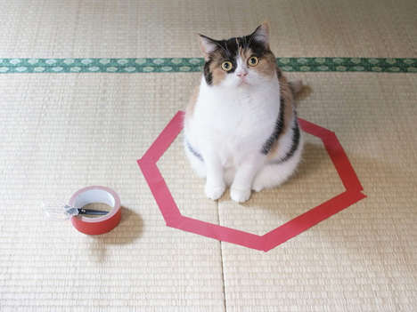 Simple Pet Traps - The Cat Circle is a Simple Phenomenon in Which Cats Sit Patiently in Circles