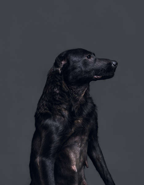 Euthanised Dog Photography - 'Memento Mori' Depicts Shelter Dogs in the Minutes Preceding Euthanasia