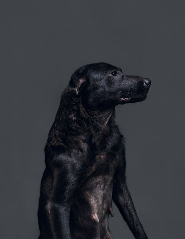 Euthanised Dog Photography