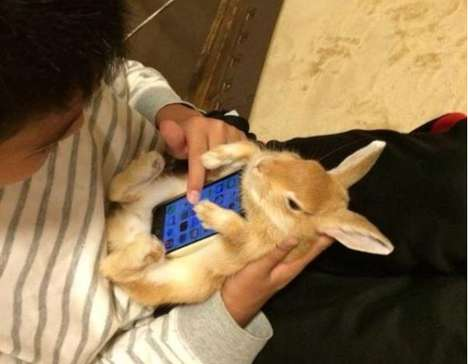 Literal Bunny Phone Cases - Twitter User Ryooneokrock1 Starts the Latest Tech Craze with His Pet