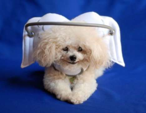 Blind Dog Accessories - Muffin's Halo Protects Visually Impaired Pets from Bangs and Bruises