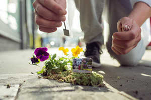 The Pothole Gardener Spruces up London's Pockmarked Streets