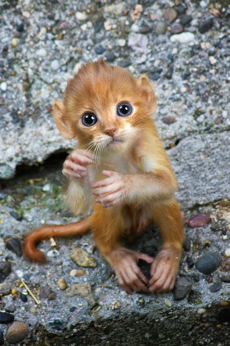 Adorable Animal Hybrids - This Sarah DeRemer Art Collection Consists of Photoshopped Monkey Kittens
