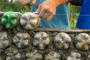 The USA Can End Homelessness by Building Plastic Bottle Houses