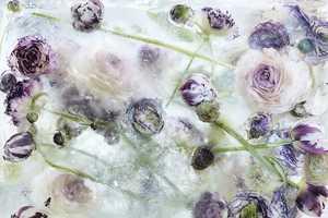 Kenji Shibata's Frozen Flower Photography is Surprisingly Gorgeous