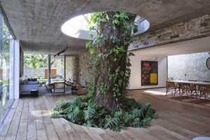 The Brazilian Tree House is Built Around a Thousand-Year-Old Tree