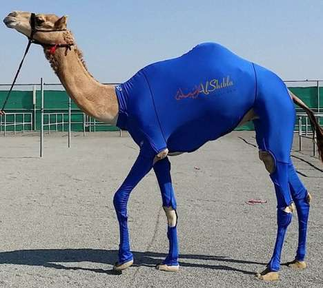 Camel Compression Suits - UAE Company Al Shibla Introduces Animal Compression Suit for Racing Camels