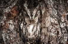 Camouflaged Owl Photography