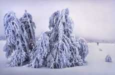 Icy Arboreal Photography - Sergey Makurin's Frozen Forest Portraits Celebrate Nature's Raw Beauty