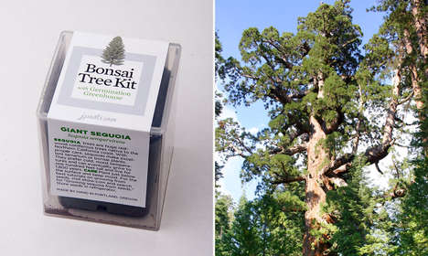 Bonsai Tree Kits - Jason Watkins Helps People Grow Their Own Giant Sequoias