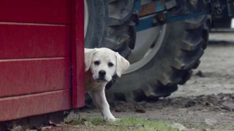 Puppy-Rescuing Ads - This Budweiser Super Bowl Ad Has a Clydesdale Horse Rescue a Lost Dog