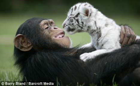 Interspecies Animal Adoptions