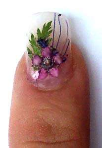 Fingernail Plants