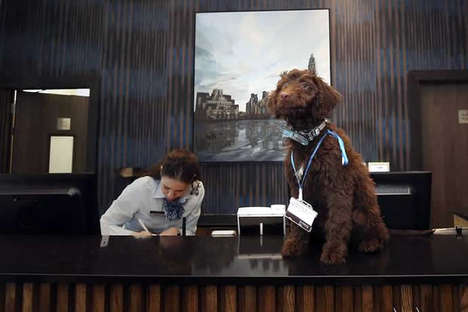 Hospitable Hotel Dogs - The Staybridge Suites Hotel Has a Puppy Greet Guests at Reception