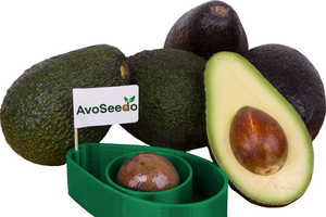Growing Avocado is Made Easy by the Floating AvoSeedo Kit