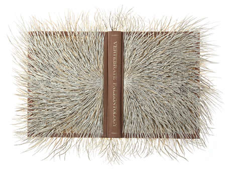 Sprawling Paper Sculptures - Barbara Wildenboer Envisions the Nervous System of Books