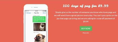 Puppy Picture Subscriptions - Pug-a-day Sends Dog Lovers 1 Pug Photo a Day for 100 Days