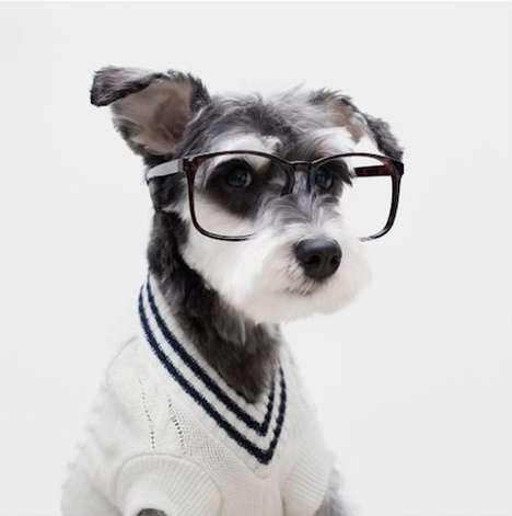 Stylish Dog Ads - The Latest Mr. Porter Fashion Campaign Features Instagram-Famous Pups