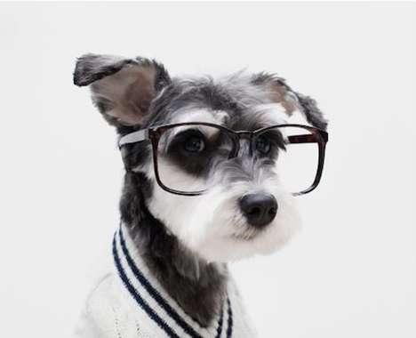 Stylish Dog Ads