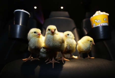 Avian Film Screening Promos - ODEON Recently Chose Small Chicks to Review the Latest Blockbusters