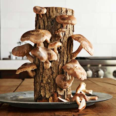Mushroom Harvesting Logs - 2funguys' Mushroom Logs Feature Shitake and Oyster Varieties
