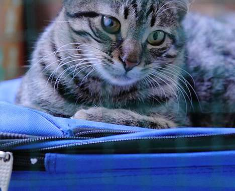 Pet Passenger Trackers